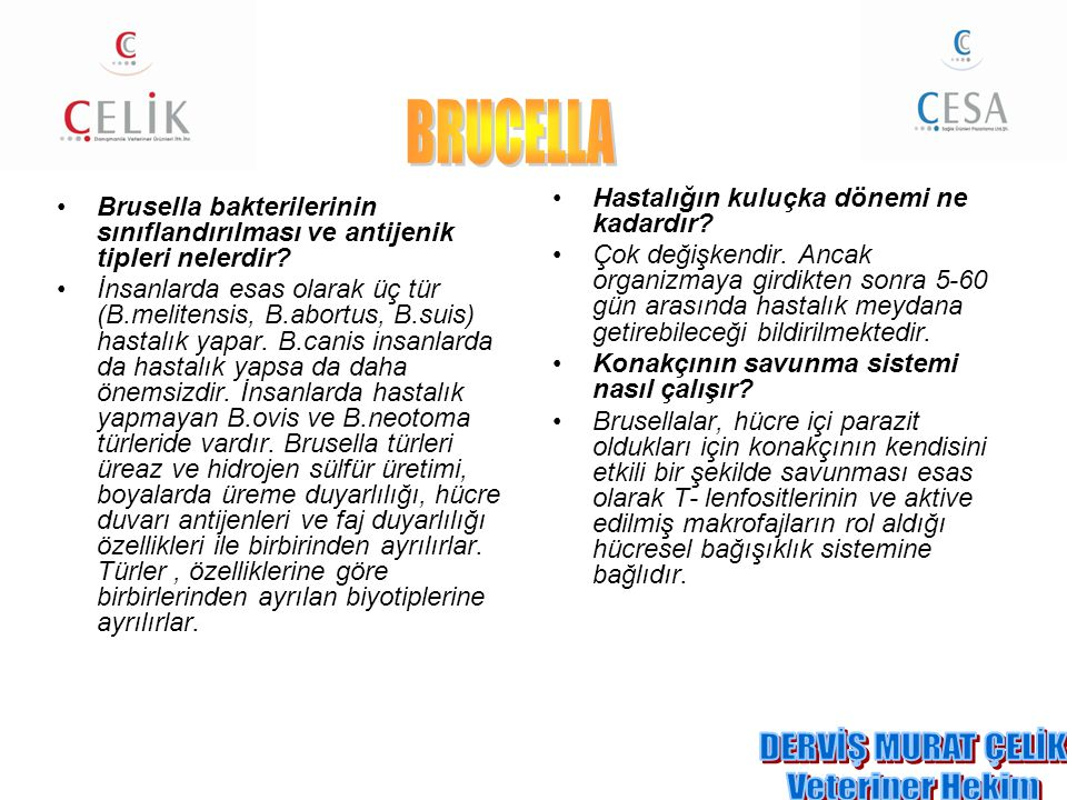 BRUCELLA DERVİŞ MURAT ÇELİK Veteriner Hekim