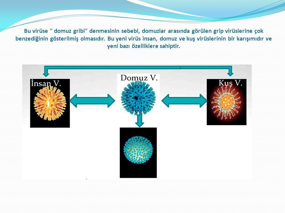 Bu virüse domuz gribi denmesinin sebebi, domuzlar arasında görülen grip virüslerine çok benzediğinin gösterilmiş olmasıdır.