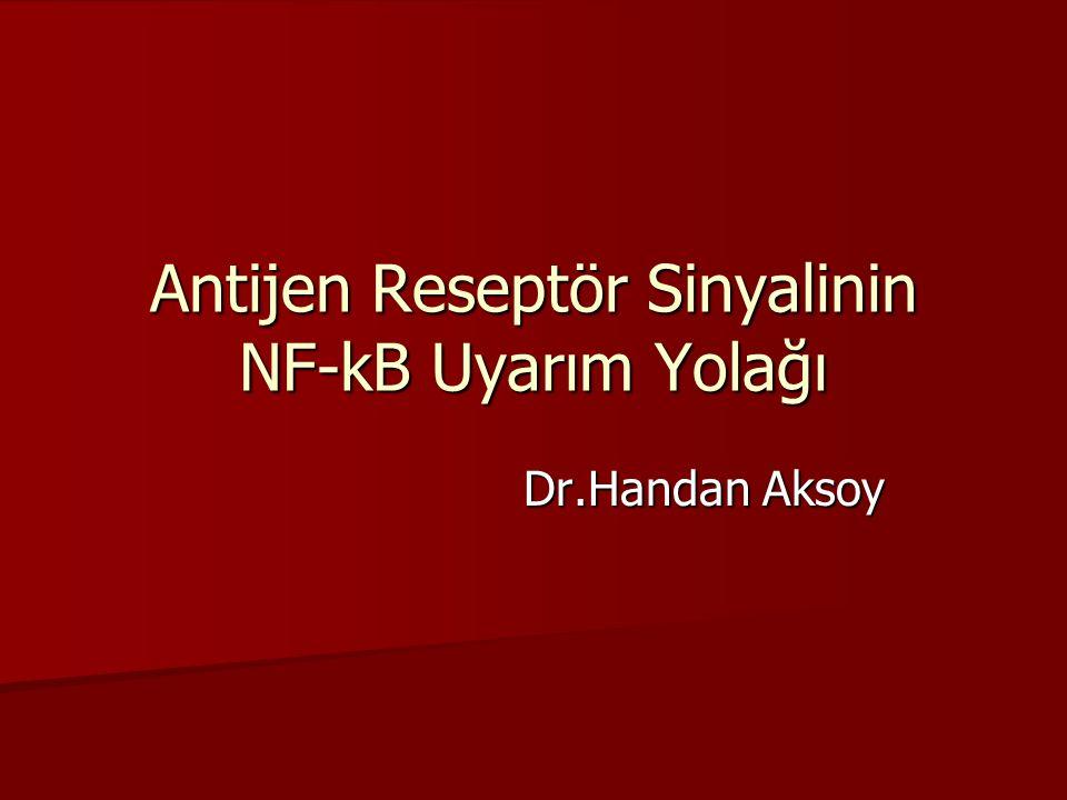 Antijen Reseptör Sinyalinin NF-kB Uyarım Yolağı