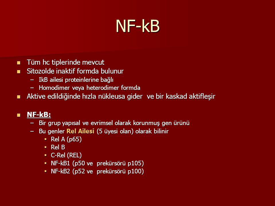 NF-kB Tüm hc tiplerinde mevcut Sitozolde inaktif formda bulunur