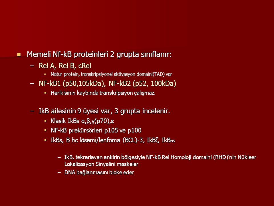 Memeli Nf-kB proteinleri 2 grupta sınıflanır: