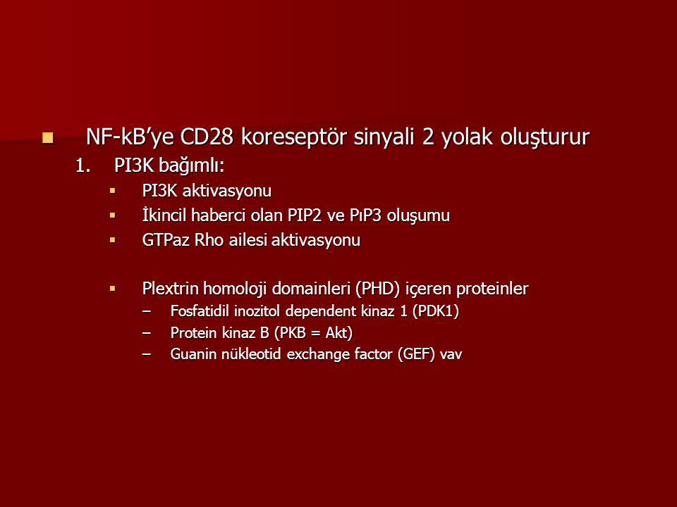 NF-kB'ye CD28 koreseptör sinyali 2 yolak oluşturur