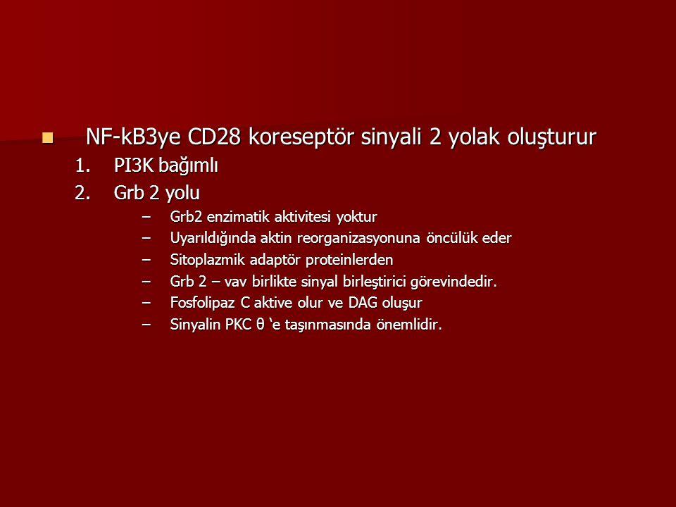 NF-kB3ye CD28 koreseptör sinyali 2 yolak oluşturur