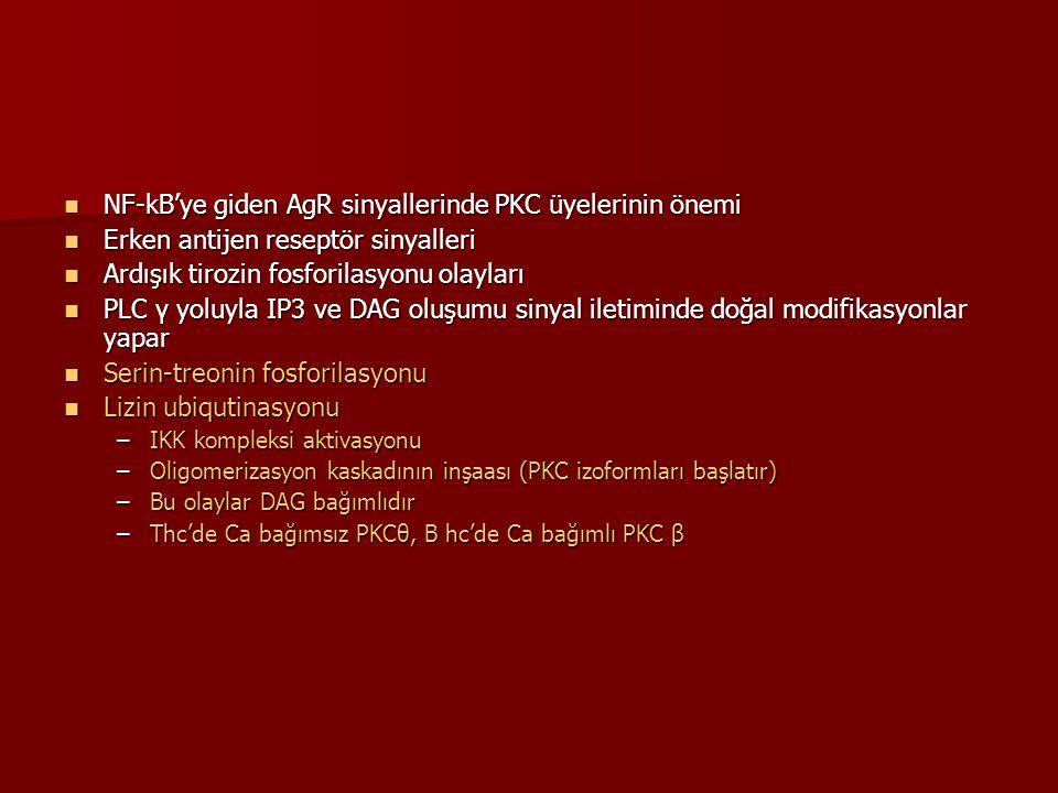 NF-kB'ye giden AgR sinyallerinde PKC üyelerinin önemi