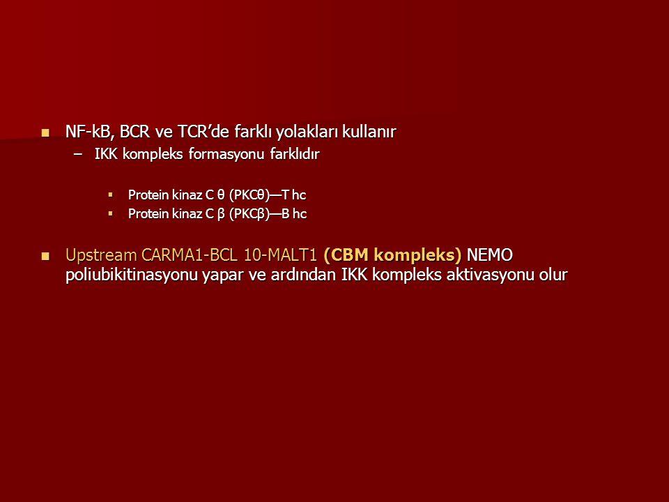 NF-kB, BCR ve TCR'de farklı yolakları kullanır
