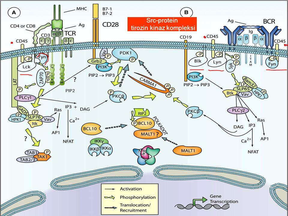 tirozin kinaz kompleksi