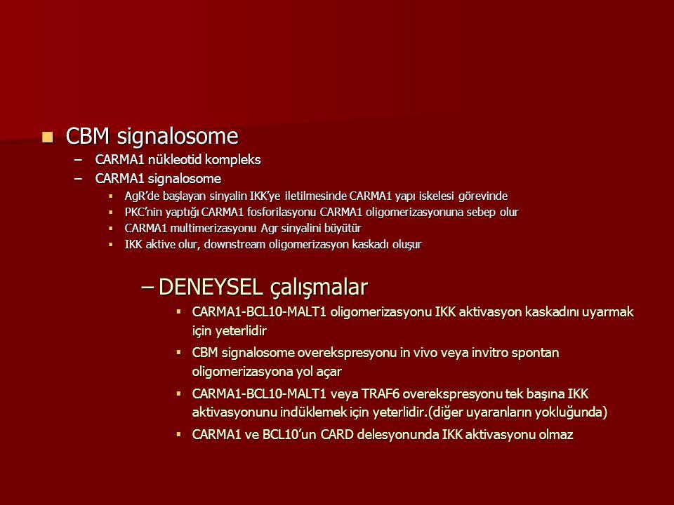 CBM signalosome DENEYSEL çalışmalar CARMA1 nükleotid kompleks