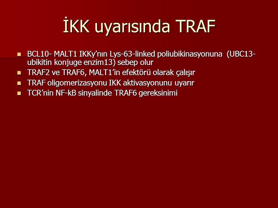 İKK uyarısında TRAF BCL10- MALT1 IKKy'nın Lys-63-linked poliubikinasyonuna (UBC13-ubikitin konjuge enzim13) sebep olur.