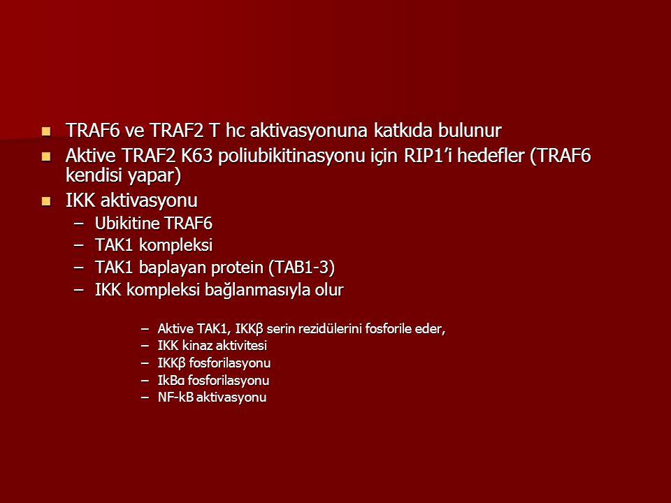 TRAF6 ve TRAF2 T hc aktivasyonuna katkıda bulunur