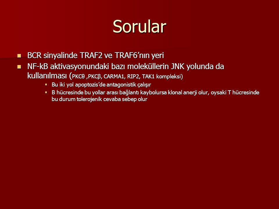 Sorular BCR sinyalinde TRAF2 ve TRAF6'nın yeri