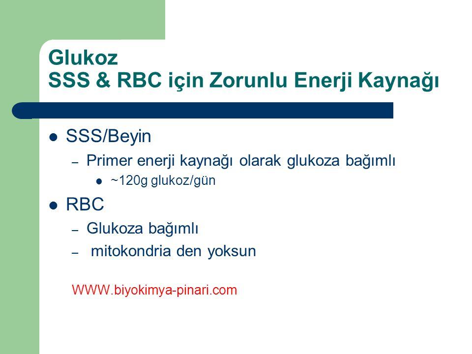 Glukoz SSS & RBC için Zorunlu Enerji Kaynağı
