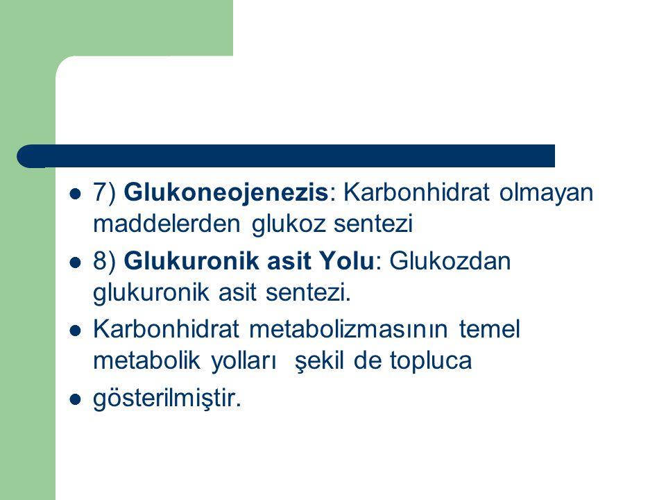 7) Glukoneojenezis: Karbonhidrat olmayan maddelerden glukoz sentezi