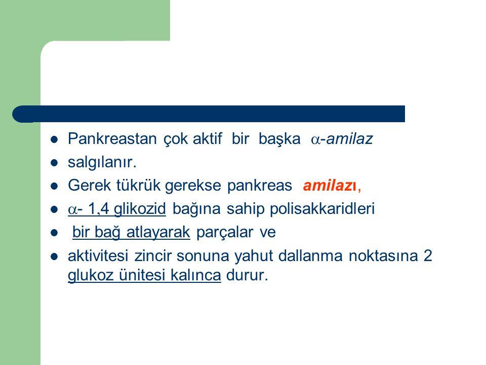 Pankreastan çok aktif bir başka -amilaz