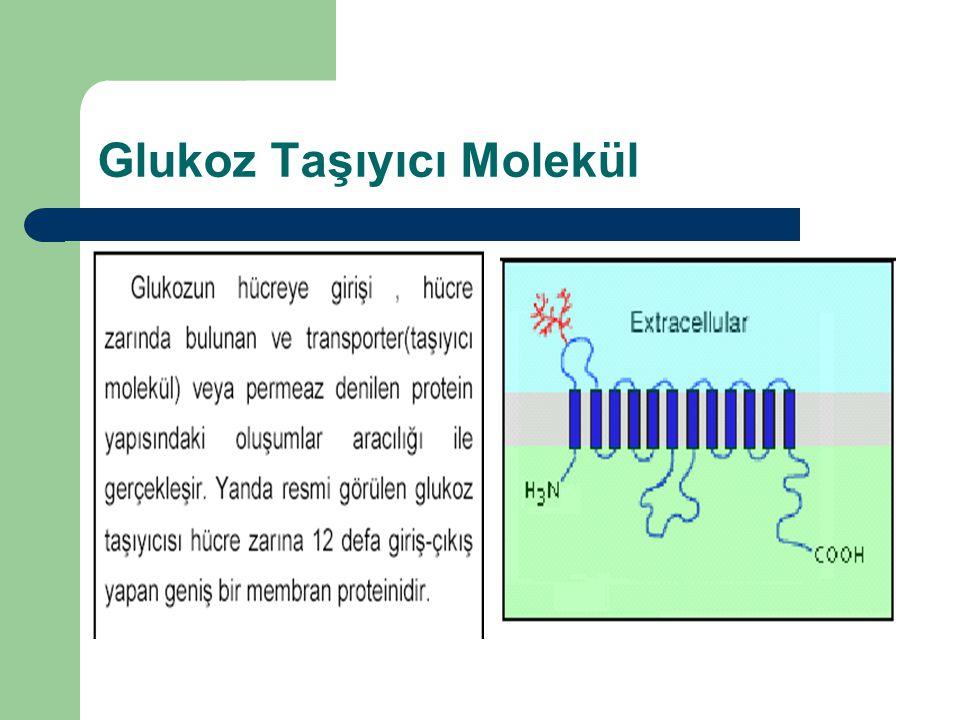 Glukoz Taşıyıcı Molekül