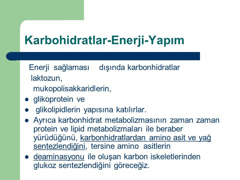 Karbohidratlar-Enerji-Yapım