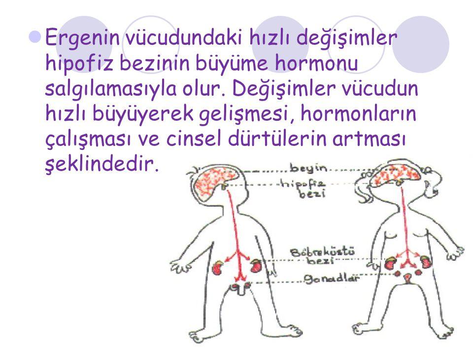 Ergenin vücudundaki hızlı değişimler hipofiz bezinin büyüme hormonu salgılamasıyla olur.