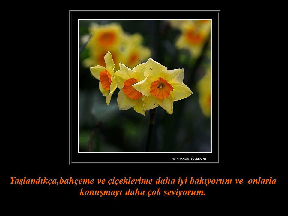 Yaşlandıkça,bahçeme ve çiçeklerime daha iyi bakıyorum ve onlarla konuşmayı daha çok seviyorum.