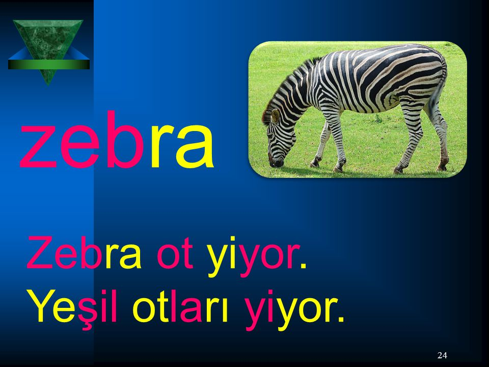 zebra Zebra ot yiyor. Yeşil otları yiyor.