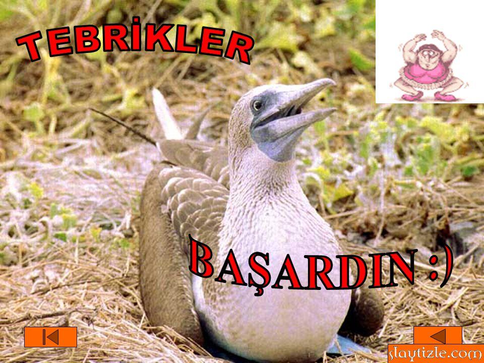 TEBRİKLER BAŞARDIN :)
