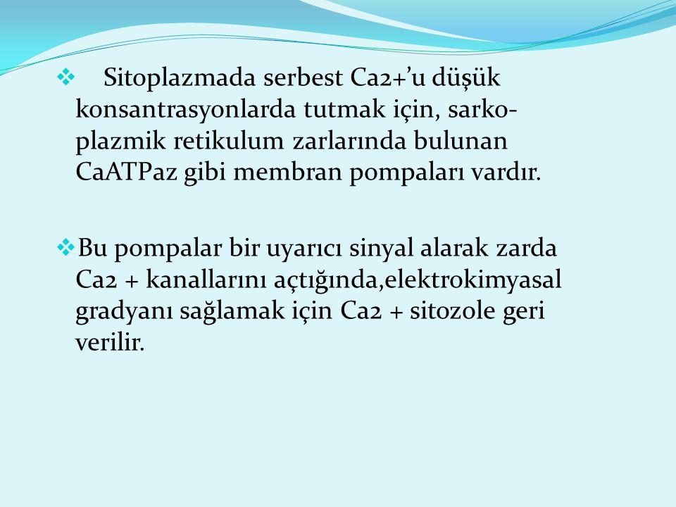 Sitoplazmada serbest Ca2+'u düşük konsantrasyonlarda tutmak için, sarko-plazmik retikulum zarlarında bulunan CaATPaz gibi membran pompaları vardır.
