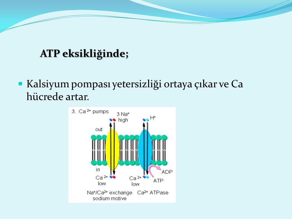 ATP eksikliğinde; Kalsiyum pompası yetersizliği ortaya çıkar ve Ca hücrede artar.