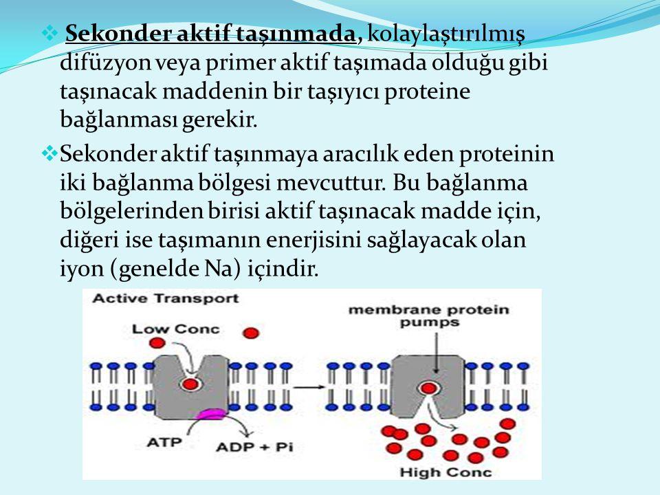 Sekonder aktif taşınmada, kolaylaştırılmış difüzyon veya primer aktif taşımada olduğu gibi taşınacak maddenin bir taşıyıcı proteine bağlanması gerekir.