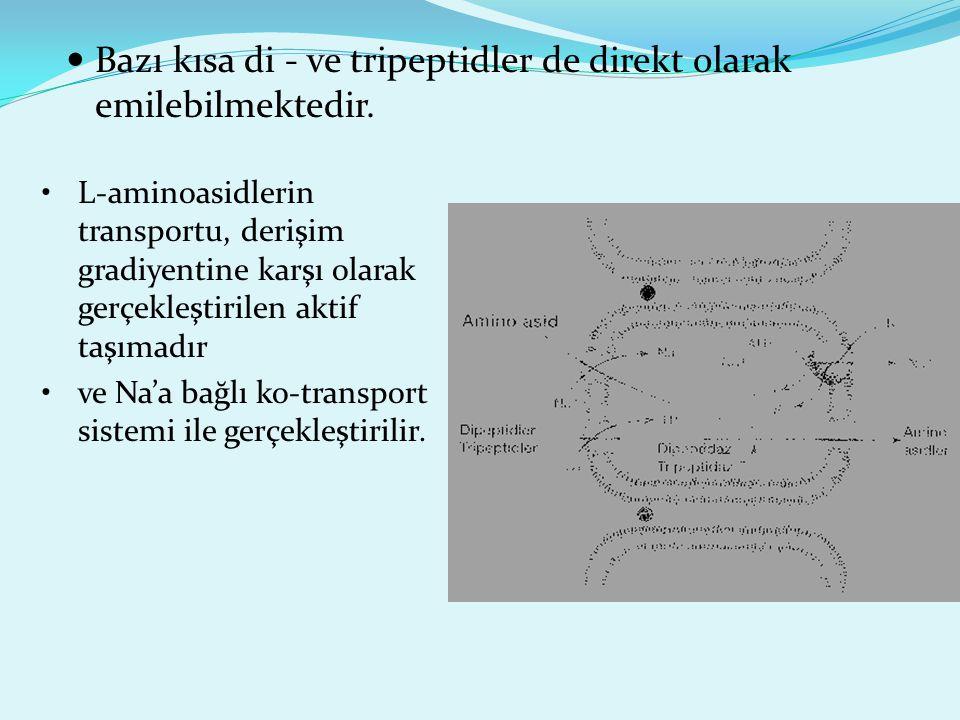 Bazı kısa di - ve tripeptidler de direkt olarak emilebilmektedir.