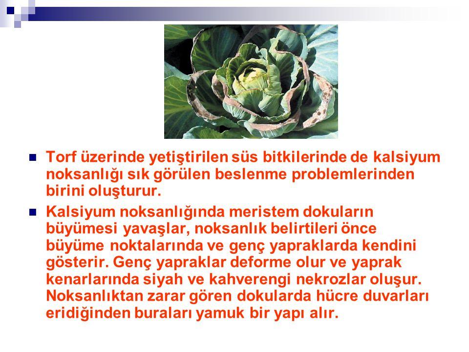 Torf üzerinde yetiştirilen süs bitkilerinde de kalsiyum noksanlığı sık görülen beslenme problemlerinden birini oluşturur.