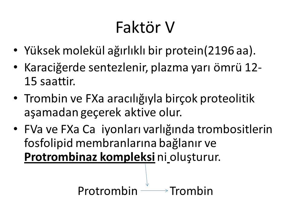 Faktör V Yüksek molekül ağırlıklı bir protein(2196 aa).
