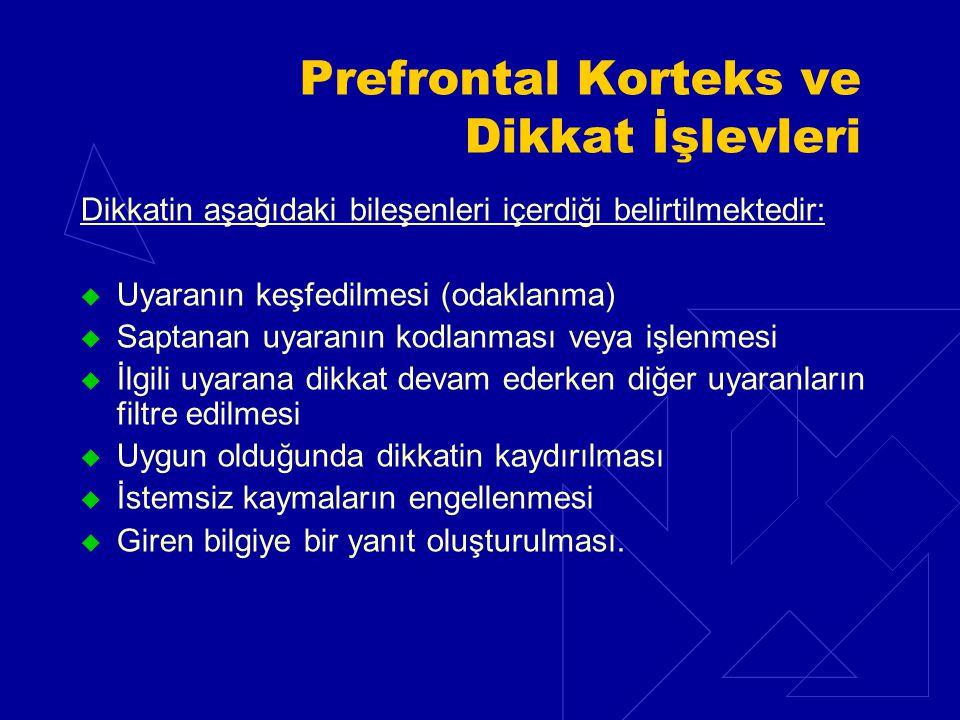 Prefrontal Korteks ve Dikkat İşlevleri