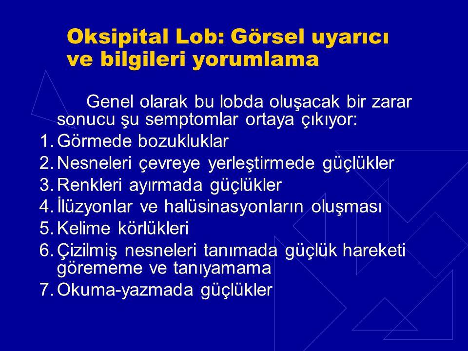 Oksipital Lob: Görsel uyarıcı ve bilgileri yorumlama