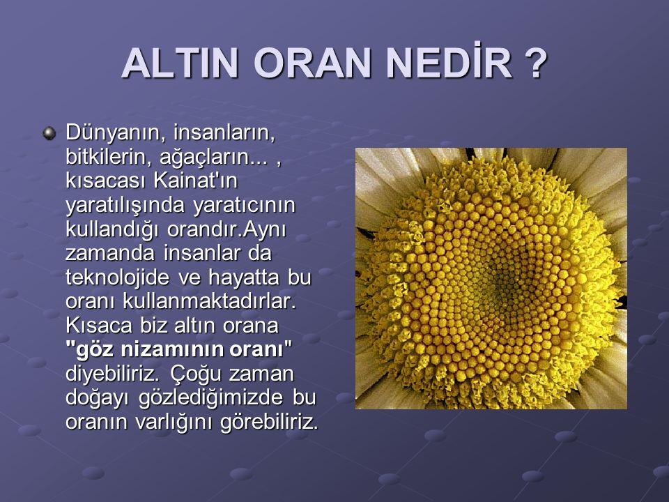 ALTIN ORAN NEDİR