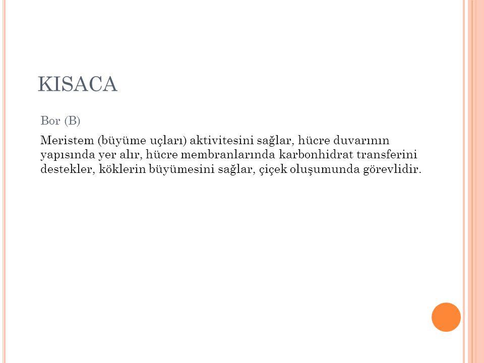 KISACA Bor (B)