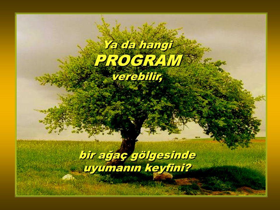 Ya da hangi PROGRAM verebilir, bir ağaç gölgesinde uyumanın keyfini