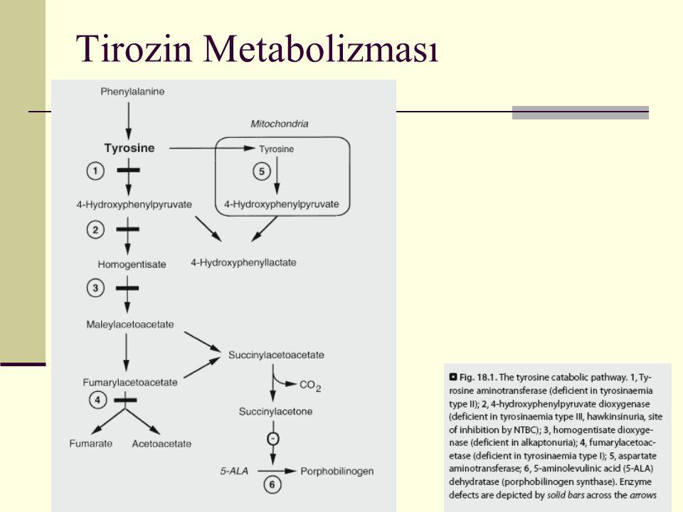 Tirozin Metabolizması