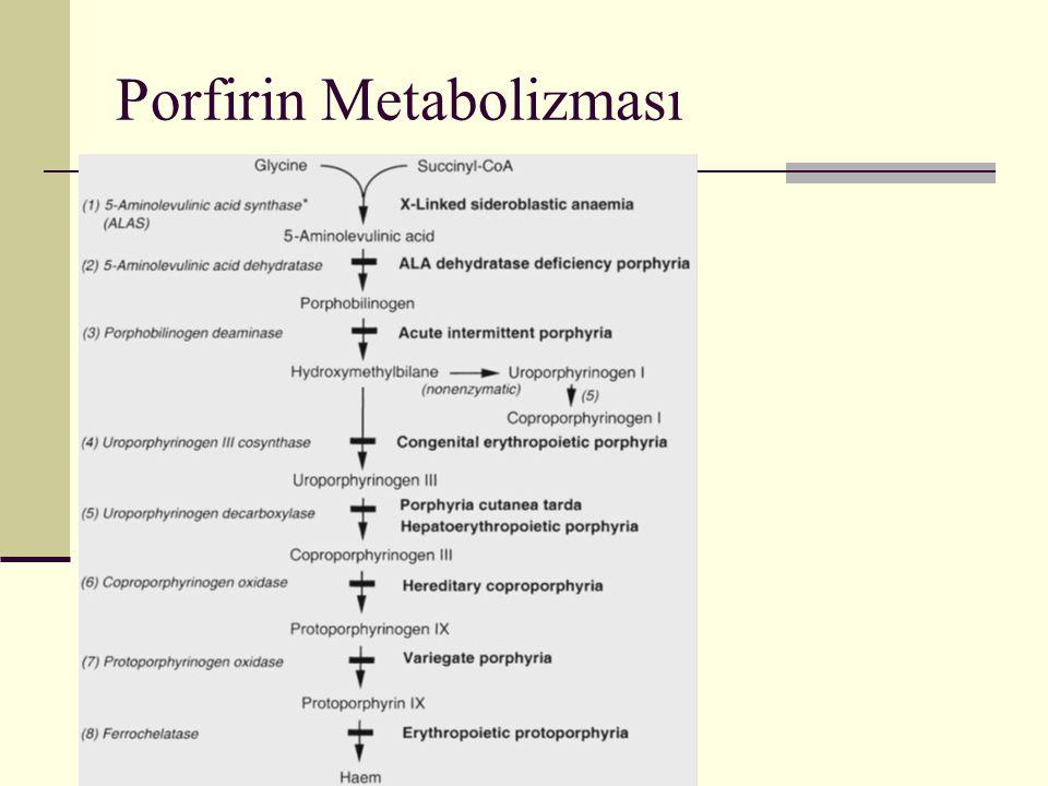 Porfirin Metabolizması