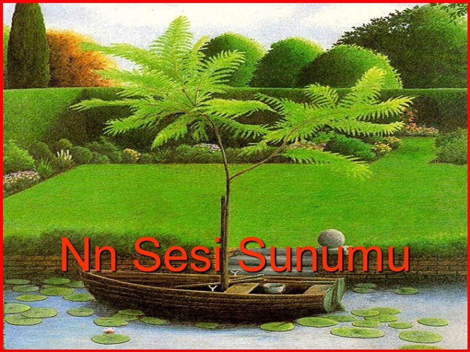 Nn Sesi Sunumu