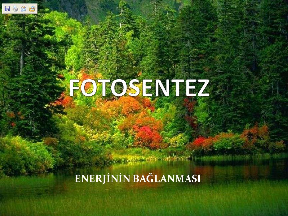 FOTOSENTEZ ENERJİNİN BAĞLANMASI
