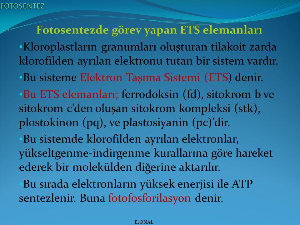 Fotosentezde görev yapan ETS elemanları