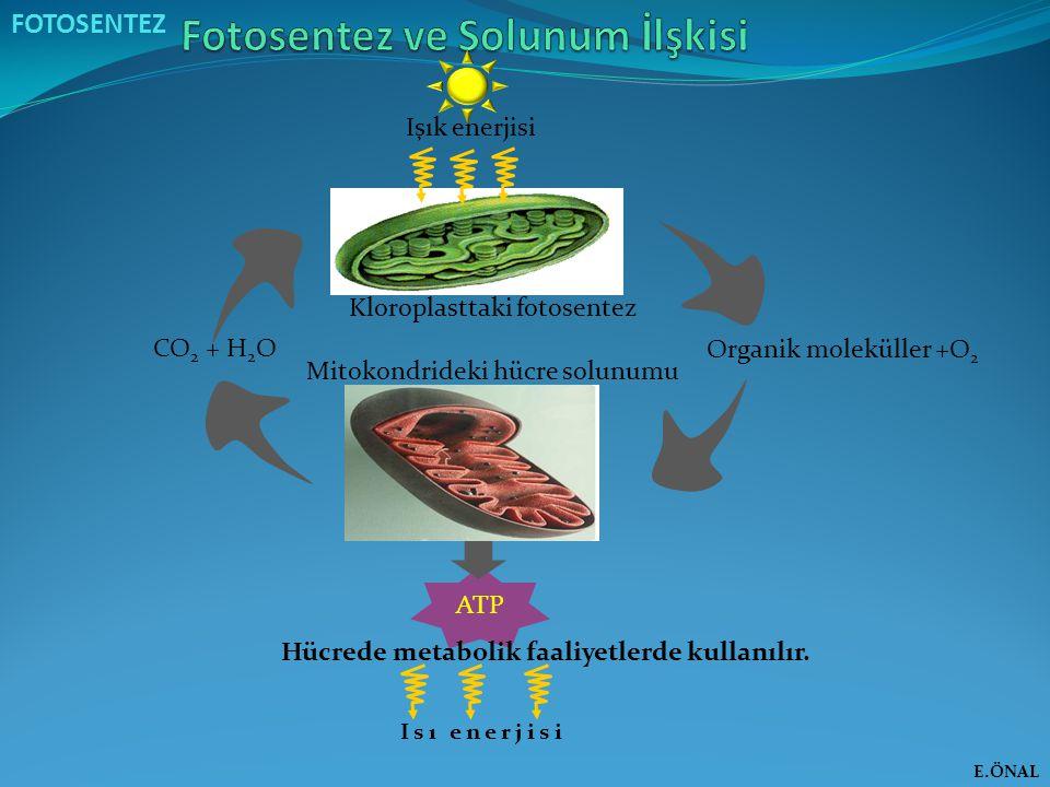 Fotosentez ve Solunum İlşkisi