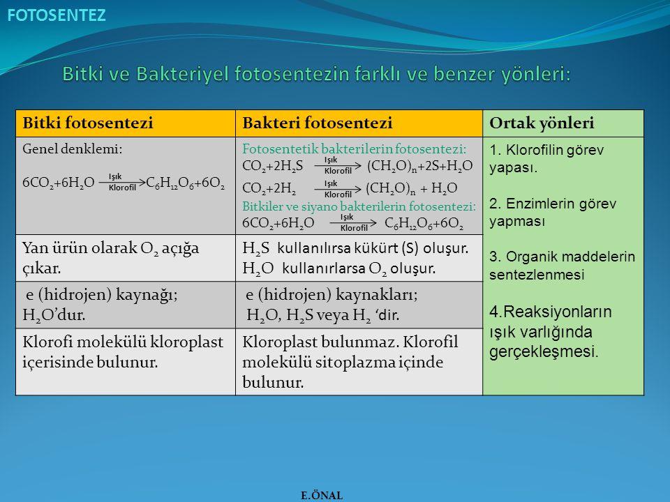 Bitki ve Bakteriyel fotosentezin farklı ve benzer yönleri: