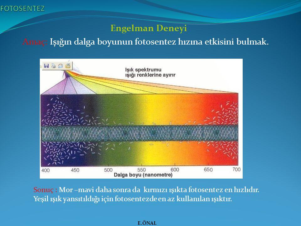 Amaç: Işığın dalga boyunun fotosentez hızına etkisini bulmak.