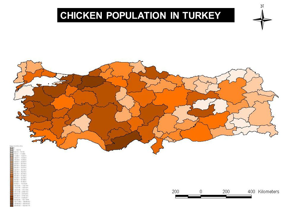 CHICKEN POPULATION IN TURKEY