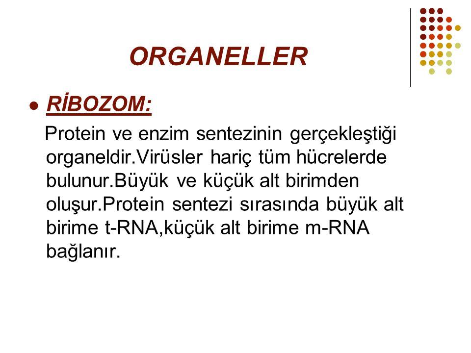 ORGANELLER RİBOZOM: