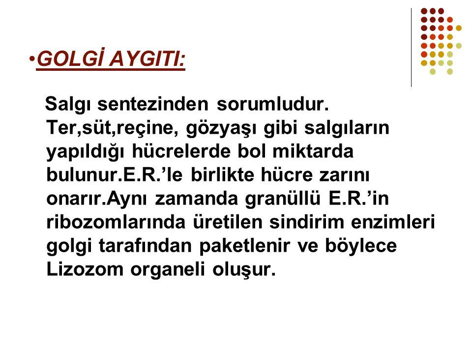 GOLGİ AYGITI:
