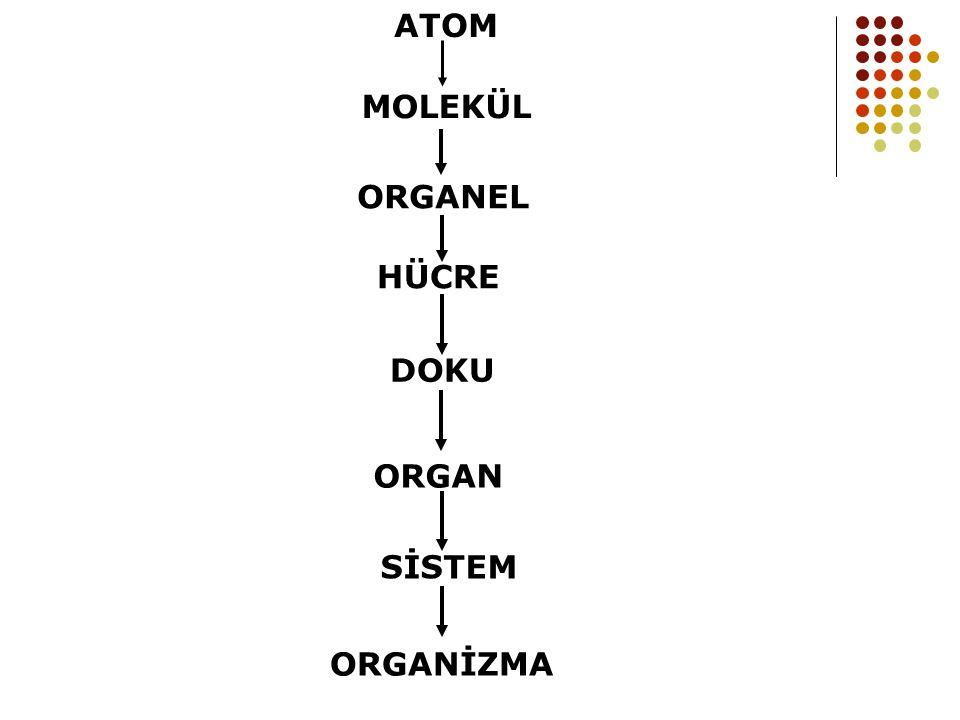 ATOM MOLEKÜL ORGANEL HÜCRE DOKU ORGAN SİSTEM ORGANİZMA