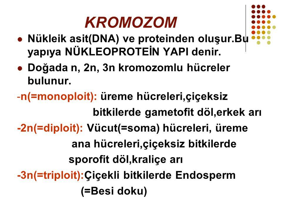 KROMOZOM Nükleik asit(DNA) ve proteinden oluşur.Bu yapıya NÜKLEOPROTEİN YAPI denir. Doğada n, 2n, 3n kromozomlu hücreler bulunur.