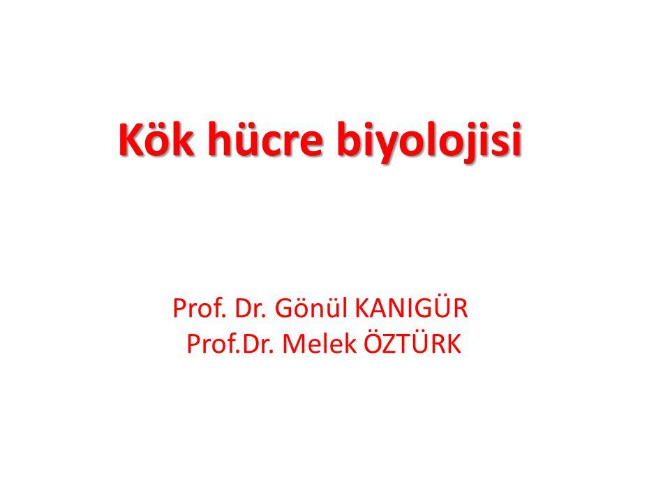 Kök hücre biyolojisi Prof. Dr. Gönül KANIGÜR Prof.Dr. Melek ÖZTÜRK