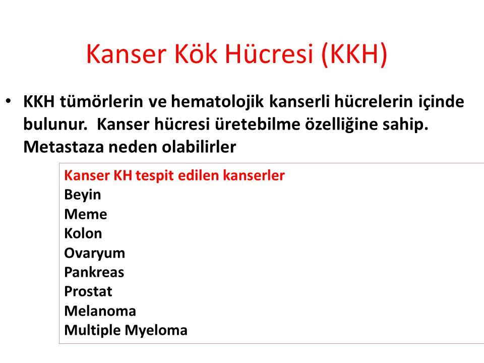 Kanser Kök Hücresi (KKH)