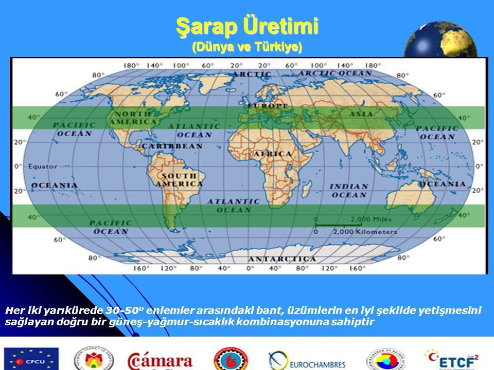Şarap Üretimi (Dünya ve Türkiye)
